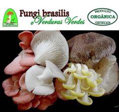 Cultivo de Pleurotus ostreatus para principiantes O mundo dos fungos Acredita-se hoje que existam cerca de 200.000 espécies diferentes de fungos, distribuídos na natureza nos diferentes ambientes. …