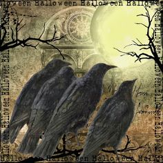 BLISS ANGELS: crows