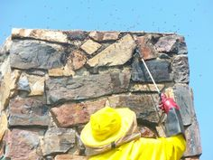 Bee removal in Johannesburg, removed bee's in a chimney in second avenue,Linden