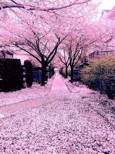 I would live here >:^) – unprofaned-trays Beautiful Nature Wallpaper, Beautiful Landscapes, Pretty Photos, Beautiful Pictures, Yuumei Art, Landscape Photography, Nature Photography, Cherry Blossom Japan, Cherry Blossoms