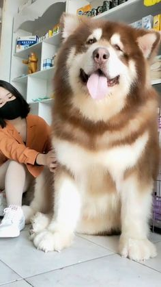 Cute Baby Horses, Cute Baby Dogs, Super Cute Puppies, Cute Funny Dogs, Cute Dogs And Puppies, Cute Funny Animals, Really Big Dogs, Huge Dogs, Giant Dogs