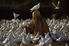 Steve McCurry-Priscilla