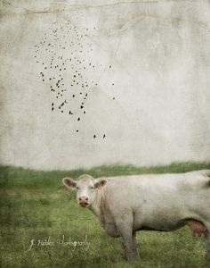 jamie heiden / salt and pepper ♥♥