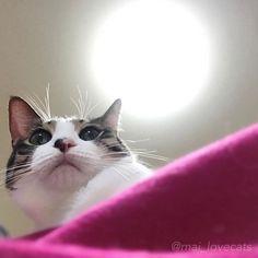 ✴︎ 下からのすみれちゃん🐱💛 . . . . #猫#ねこ#ネコ#ねこ部#にゃんこ#ぬこ#愛猫#溺愛#猫好き#猫大好き#猫溺愛#甘えん坊猫#家族猫#キジシロ#ハチワレ#シロクロ#猫好きさんと繋がりたい#にゃんすたぐらむ#cat#instacat#instacats#catstagram