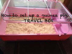 how to travel SAFELY with guinea pigs