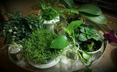 Tray of greens....