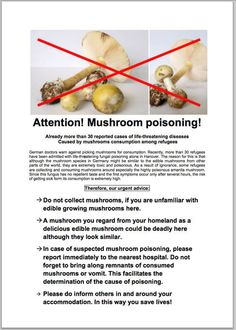 Another Hazard for Migrants in Europe: Poisonous Mushrooms - The New York Times