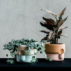 Ann Kristen Einarsen's Rolla planter takes inspiration for its form from the Plus salt and pepper grinders by Norway Says for Muuto