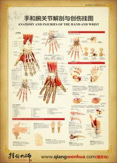 骨骼解剖图_腰椎骨骼解剖图_人体骨骼解剖图高清_社会新闻_中国太子