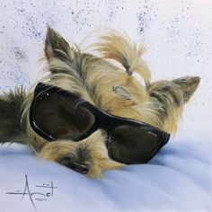 Yorkie commission Oil on canvas 30cm x 30cm SOLD