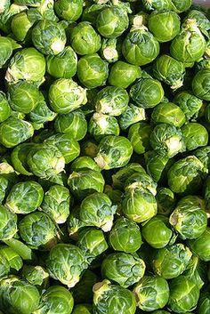 Cavolini in Canapè | Ricette Vegetariane