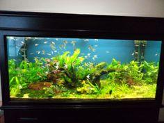Jual tanaman air aquascape di jakarta