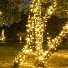White LED Christmas Tree Lights Christmas Lights Wedding, White Christmas Lights, Christmas Lights Outside, Xmas Lights, Decorating With Christmas Lights, Christmas Fairy, Holiday Lights, Retro Christmas, Outdoor Christmas