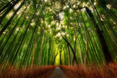 Top Fairy Tail Travel Destinations Bamboo forest, Kyoto, Japan The plant is so popular in Asia, that it even has many symbolical meanings. In China it stands for longevity, in India – for friendship. And in Japan it is believed that bamboos save against evil. Therefore, many forests and hiking tracks are found there.