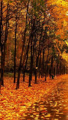 autumn_park_the_avenue_trees_path_tile_wet_57308_640x1136