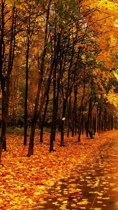 autumn_park_the_avenue_trees_path_tile_wet_57308_640x1136