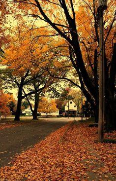 La imagen puede contener: árbol, cielo, planta, exterior y naturaleza