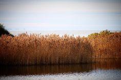 Agernæs #visitfyn #fyn #nature #visitdenmark #naturelovers #nofilter #natur #denmark #danmark #dänemark #landscape #nofilter #assens #mitassens #vildmedfyn #fynerfin #assensnatur #vielskernaturen #visitassens #instapic #flora #picoftheday #november #sea