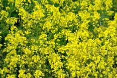 Negrilica, planta pe care Tutankhamon a luat-o și în mormânt   Paradis Verde Paradis, Parsley, Green, Anorexia, Plant