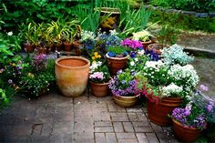 This is more along the line of what I meant with potted flowers... Flowering plants in pots which could be scattered around the garden