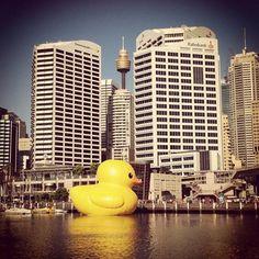 Darling Harbour Marina, Darling Harbour, Sydney NSW