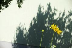 a little flower in the city, vienna Vienna, Dandelion, Photographs, City, Flowers, Plants, Floral, Fotografie, Plant