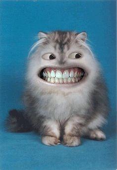DISCOVER DENTISTS® Cat http://DiscoverDentists.com #dental2000nj