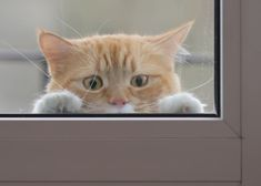 Learn seven tips to keep your indoor cat from dashing out an open door to outside, by certified cat behaviorist Arden Moore for Pets Best pet insurance. Pet Insurance Cost, Pet Health Insurance, Insurance Website, Insurance Agency, Insurance Companies, Animal Medicine, Puppy Care, Dog Care, Gatos