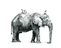 Giants of Wild Africa Gentle Giant, Pencil Illustration, Elephants, New Work, Africa, Behance, Gallery, Check, Animals