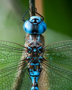 Dragonfly Image, Nature Photo, Insect Photo 5x7 to 13x19