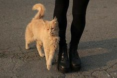 Imagen de cat, black, and grunge Crazy Cat Lady, Crazy Cats, I Love Cats, Cute Cats, Fur Babies, Indie, Dog Cat, Cute Animals, Hipster