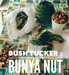 Bush Tucker : Sampling the Bunya Nut Aboriginal Food, Native Foods, Australian Bush, New Flavour, Preserves, Snack Recipes, Chips, Beef, Magic