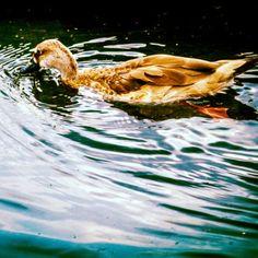 """""""Águas"""" por @sallespris Parabéns!! Essa foto foi escolhida como uma das ganhadoras da semana, corre lá no site do Bombou para saber mais e garantir seu brinde!"""