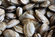 A new study concluded that the acidification is so intense that the mollusks aren't able to properly producea hard shell, putting them in peril. Description from zmescience.com. I searched for this on bing.com/images