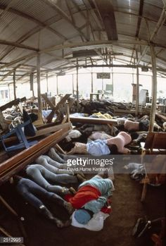 Dead bodies lie in the compound of the People's Temple cult November 1978 in Jonestown, Guyana after over 900 members of the cult, led by Reverend Jim Jones, died from drinking cyanide-laced Kool. Get premium, high resolution news photos at Getty Images Jonestown Massacre, Broken Soul, Ted Bundy, Police, The Rev, Life And Death, Scene Photo, True Crime, American History
