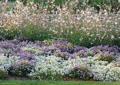 Alysses, agératums and gauras for fragrant flower beds with long-lasting flowering . Garden Pool, Herb Garden, Lawn And Garden, Garden Plants, Gaura, Parc Floral, Garden Pictures, Garden Cottage, Plant Design