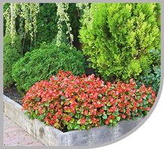 Kertészkedés a Holddal - a kertészeti holdnaptár használata | Kertészeti holdnaptár-Virida.hu