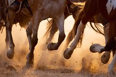 horse legs running - Google Search