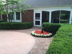 Red and white wax begonias Annuals in landscape