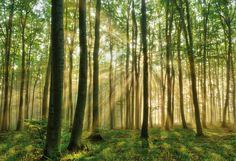 Bildresultat för tapeter skog träd
