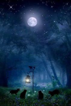 Fantasy sun moon, stars and moon, dark moon, witch cat, ciel nocturne Stars Night, Night Light, Witch Cat, Moon Witch, Photo Chat, Moon Magic, Beautiful Moon, Beautiful Forest, Moon Art