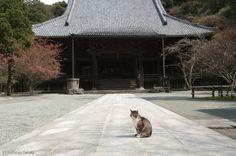 2010年11月 : Cats in Town Blog