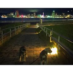 Instagram【muffin_chiffon】さんの写真をピンしています。 《☆. テクテク🐾🐾してたら、 あっという間にNight view✨ 六甲山の⚓️マークも見えたっ♡ . . . #iPhone  #ミニチュアシュナウザー #dog #miniatureschnauzer  #instadog #east_dog_japan #dogoftheday #犬バカ部  #犬の生活が第一 #ilovemydog #team_jp #bestjapanpics #japan_night_view #お散歩  #マフィンとシフォン #7pets_1day #nightview #landscape #igres #igresjp #landscape_lovers #special_shots  #夜景 #kobe #神戸 #犬連れ旅行 #わんことお出かけ #犬旅 #みなと神戸  #お気に入りの場所》