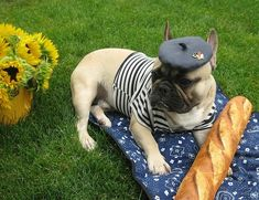 Baguette eating, Beret wearing Frenchie... Limited Edition French Bulldog Tee http://teespring.com/lovefrenchbulldogs