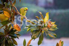 #Rose #ringed #parakeet #animal #bird #nature