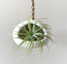 12 Elegant Ways To Bring Air Plants Into Your Home // This ceramic air plant holder adds an additional element of nature with a sisal rope hanger.