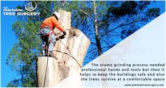 Local Tree Removal Adelaide - The Adelaide Tree Surgery offers best Tree removal service by highly experienced professional tree cutter in Adelaide, SA. Contact Now!