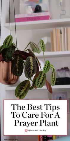 Prayer Plants Have One Strangely Fascinating Feature House Plant Care, House Plants, Outdoor Plants, Indoor Outdoor, Plants Indoor, Prayer Plant Care, Calathea Plant, Snake Plant Care, Inside Plants