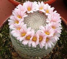 Resultado de imagen para cactus especies