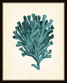 Antique Sea Coral in Aqua Plate 3 Natural History Art Print 8 x 10 Original Collage Sea Beach Nautical Coastal Living Decor. $10.00, via Etsy.
